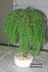 Дерево из бисера: Ива